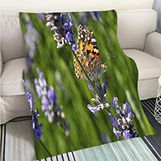 BEICICI Art Design Photos Cool Quilt Painted Lady Butterfly UK Fun Design All-Season Blanket Bed or Couch