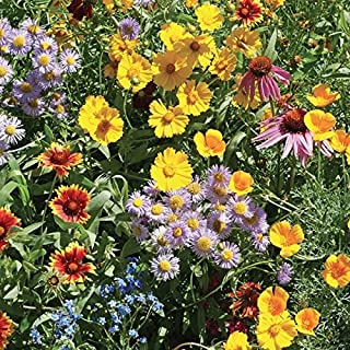 Burst of Bloom Wildflower Seeds Mix (Attracts Butterfly's/Hummingbirds!) - 2500+ Premium Quality Seeds - ON Sale!- (Isla's Garden Seeds) - 90% Germination