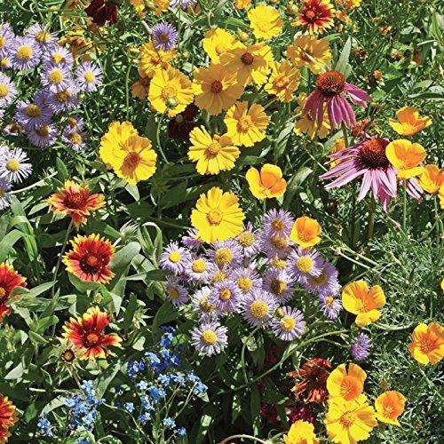 Burst of Bloom Wildflower Seeds Mix (Attracts Butterfly's/Hummingbirds!) - 2500+ Premium Quality Seeds - ON Sale!- (Isla's Garden Seeds) - 90% Germination