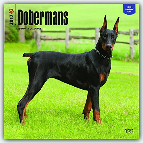 Dobermans - Dobermänner 2017 - 18-Monatskalender mit freier DogDays-App: Original BrownTrout-Kalend