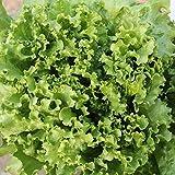 200 / bolsa de semillas de lechuga rápida americana, crecen rápido muy grandes semillas de frutas y hortalizas para el hogar, que no come-gmo Bonsai semillas balcón