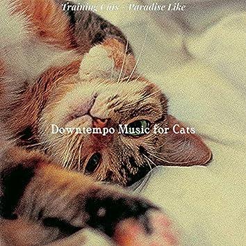 Training Cats - Paradise Like