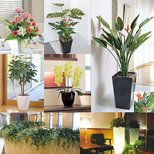 光触媒人工観葉植物光の楽園壁掛フィロ(壁掛けタイプ)272B35
