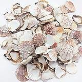 PEPPERLONELY Sea Shells Mixed Pecten Nobilis Scallop,Various Size, 1-1/2 Inch ~ 2-1/2 Inch, 800 Gram, Apprx.120 PC Sea Shells