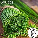 catkoo seme, 500 pezzi di scalogno cipolla verde semi di condimento vegetale giardino fattoria pianta bonsai, cucina adatta, balcone, soggiorno, decorazione del giardino semi di cipolla verde