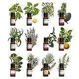 Kit aromathérapie - Lot de 12 huiles essentielles 10ml 100% pures et naturelles. Qualité France. Avec Notice