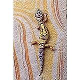 Kits de Diamond Art para adultos DIY, Gecko colorido 40x80cm taladro completo 5D diamond painting estrás bordado punto de cruz suministros artísticos,manualidades lienzo decoración de la pared Regalo