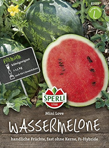 Wassermelone, Mini Love, Citrullus lanatus