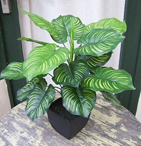 Licht & Grün exclusive Kunstpflanzen Künstliche Calathea Pflanze im Topf ca. 45cm -Top Qualität