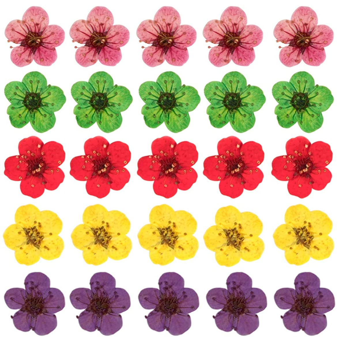 100 PCS Dried Pressed Flowers, 0.6 cm Mini Daffodil Natural Dry Plant Herbarium 3D Nail Stickers for Resin Jewelry Pendant Bracelet Phone Case Scrapbook Nail Art Crafts DIY Making - Random Color