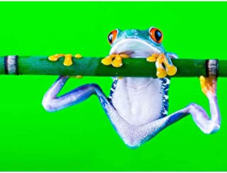 Best blue frog posters Reviews