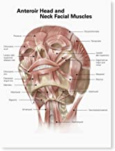 Posterazzi GLP469052LARGE Poster Print Collection Anterior Neck And Facial Muscles Of The Human Head (With Labels). Poster...