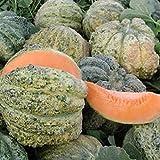Melone Zatta (Semente)