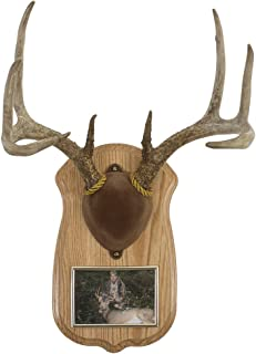 Walnut Hollow Country Deluxe Antler Display Kit with Photo Frame, Oak