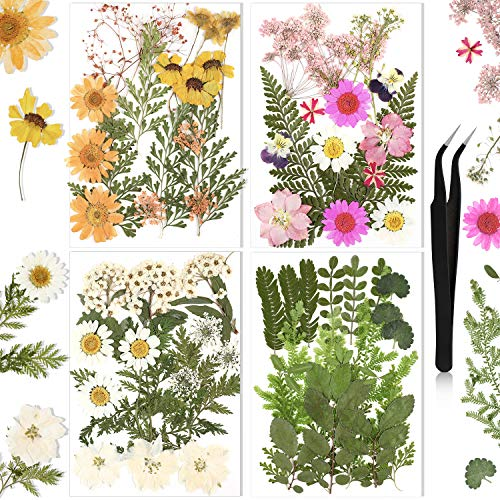 68 Pieces Real Dried Pressed Flowers