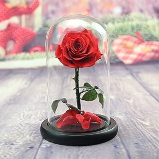 TP&DD Principito Flor eterna,Cubierta de Cristal Rosa Fresca Rosa Sola, Decoración Creativa-A 18x18x28cm(7x7x11inch)