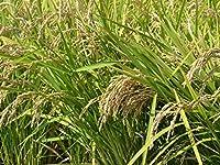 名手農園 淡路産 淡路米 にこまる 2019年産 10kg(白米10kg) 地域限定
