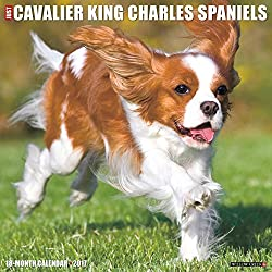 Just Cavalier King Charles Spaniels 2017 Calendar (英語) カレンダー – Wall Calendar[Willow Creek Press/Amazon]