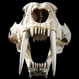 PPCP Ancient Animal Saber Tiger Cat Skull Saber Specimen Model Animal Skeleton Model