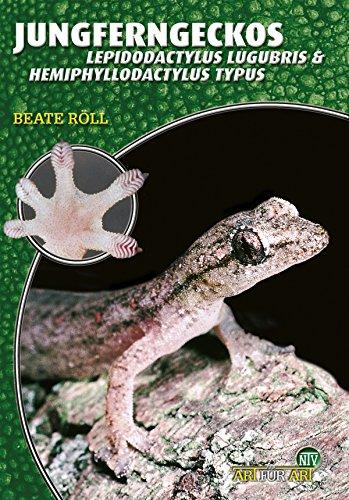 Jungferngeckos: Lepidodactylus Lugubris & Hemiphyllodactylus Typus (Art für Art)