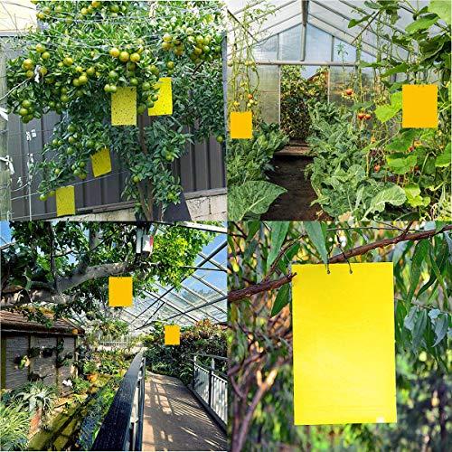 40 Sticker, Gelbtafeln und Blautafeln Fliegenfallen Klebrige Insektenfalle - 7
