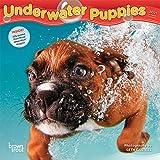 Underwater Puppies 2021 7 x 7 Inch Monthly Mini Wall Calendar, Pet Humor Dog