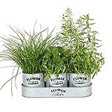 albena Shop 73-156 Elsa Conjunto de 3 macetas de Hierbas jardín con Bandeja de...