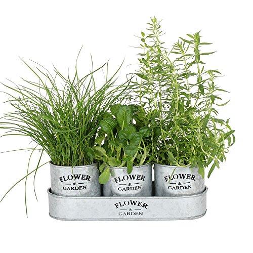 albena shop 73-156 Elsa Conjunto de 3 macetas de hierbas jardín con bandeja de zinc 31,5 x 11 x 11...