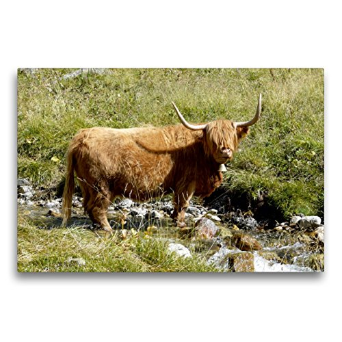 CALVENDO Toile Textile de qualité supérieure 75 cm x 50 cm - Motif Vache écossaise sur Le Bateau.