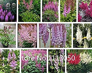 Sale! 500pcs 10 kinds Bonsai Astilbe chinensis Seeds Organic Blooming Flower Seeds Garden Plant