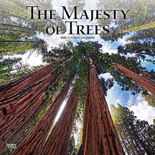 The Majesty of Trees - Majestätische Bäume 2020 - 16-Monatskalender: Original BrownTrout-Kalender [Mehrsprachig] [Kalender] (Wall-Kalender)