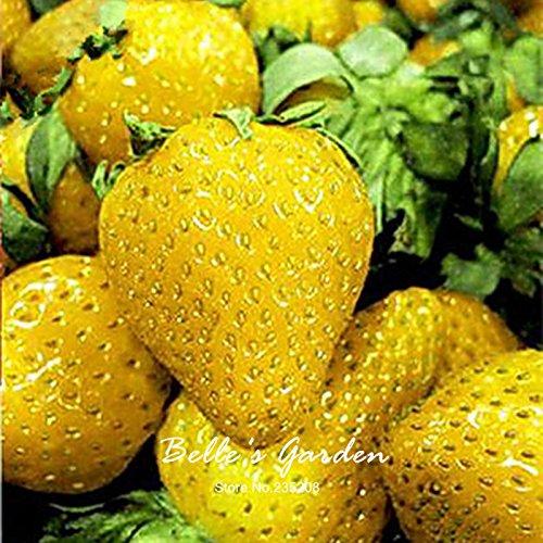 100pcs 9 variétés Choix Strawberry Graines Fraise Fruit Graines pot Bonsai Balcon Patio Jardin Plante Bricolage Jaune