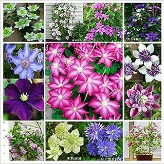 Clematis,clematis Flowers, Creeper Climbing Plant Clematis Seeds - 200 Pcs Seeds/bag