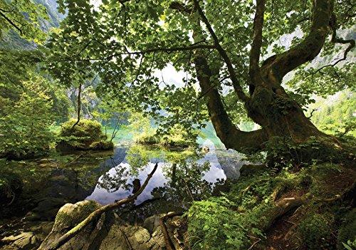 DekoShop Fototapete Vlies Tapete Moderne Wanddeko Wandtapete Wald AMD10222V8 V8 (368cm. x 254cm.) Natur, Wald, Blumen