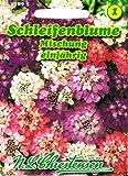 Schleifenblume Mischung , einjährig, reichblühend, für Rabatten und Gruppenpflanzungen 'Iberis umbellata'