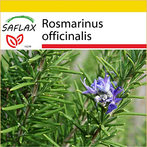 SAFLAX - Kit de culture - Romarin - 100 graines - Rosmarinus officinalis