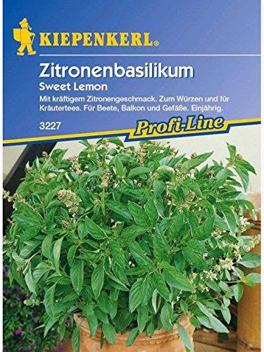 Basilikum Zitronenbasilikum Sweet Lemon