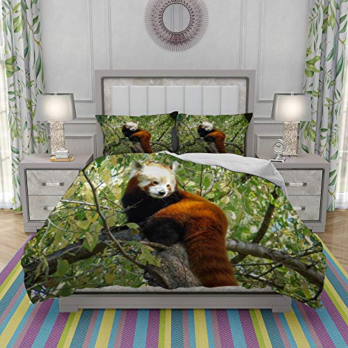 REIOIYE Duvet Cover Set-Bedding,Red Panda,Quilt Cover Bedlinen-Microfibre 200x200cm with 2 Pillowcase 50x80cm