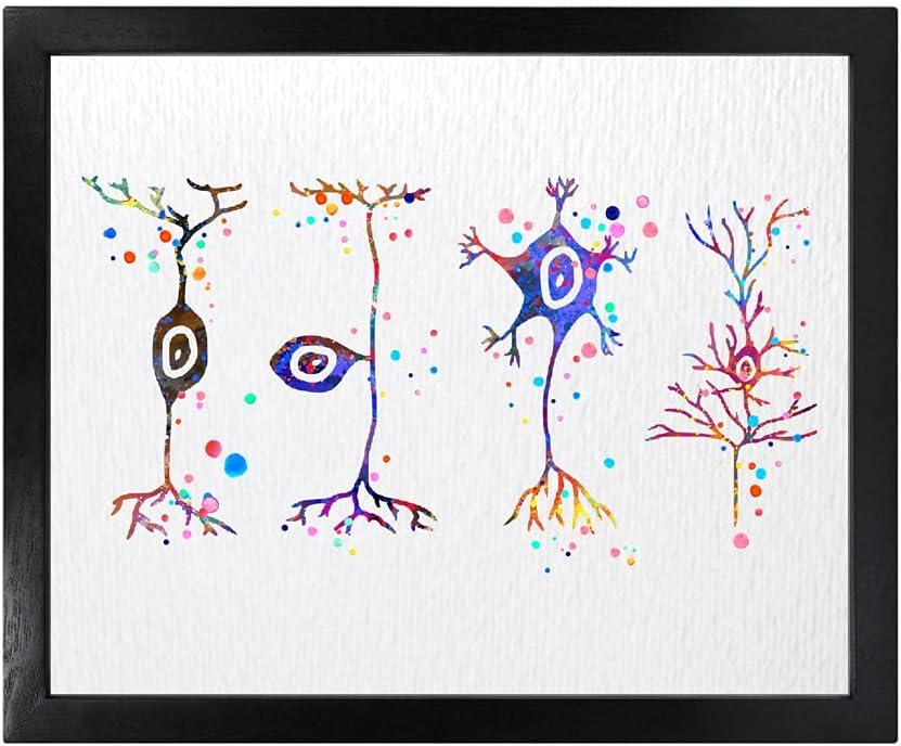 Dignovel Studios 8X10 Unframed Neuron Types Art Science Neurology Medical Art Brain Neuroscience Neurologist Office Clinic Watercolor Art Print Poster Wall Art Nursery Kids Office Home Decor DN580
