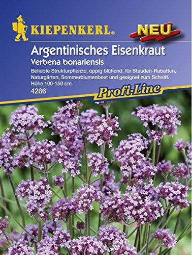 Verbena bonariensis Argentinisches Eisenkraut