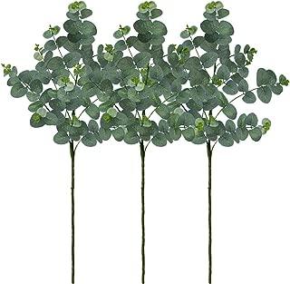 order silver dollar eucalyptus