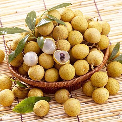 1 Sac 5 Pcs Longan Sweet Seeds yeux des arbres fruitiers Graines Fleurs Rare Bonsai Plantes en pot semences Pour la maison Sementes Jardin