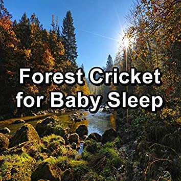 Forest Cricket for Baby Sleep
