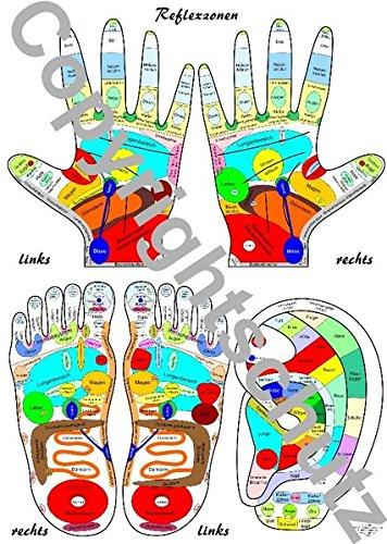 Reflexzonenübersicht - Füße, Hände und Ohr DIN A4 Karte (Lehrtafeln/Übersichtskarten)
