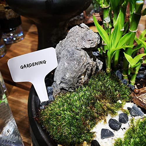 """G2Plus 100Stk. Mini T-Form Plastik Pflanzenstecker StecketikettenBeschriften Pflanzschilder Schilder 6CM * 10CM Sind Praktisch für Alle """"Gärtner"""" (Weiß) - 6"""