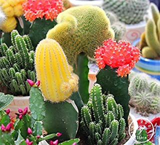 Mezcla de semillas de cactus, semillas de flores, Echinopsis alta germinación de semillas - las partículas 10, # SSALYF
