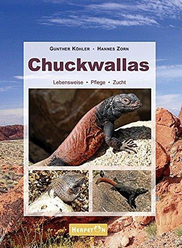 Chuckwallas: Lebensweise, Pflege, Zucht
