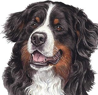 Mejor Perro Bernese Mountain Dog
