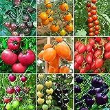 450ピース9色トマト種子、家庭菜園用の食用植物を育てるのは簡単盆栽ガーデンファームインテリアガーデンバルコニー/パティオ