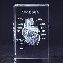 Best anatomical heart lamp Reviews